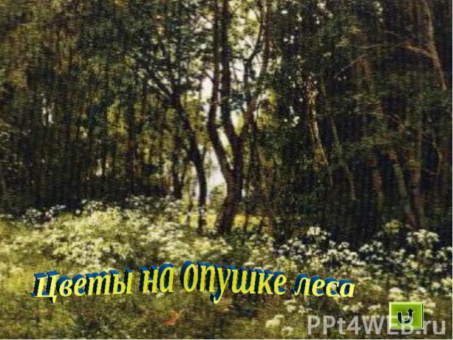 Цветы на опушке леса