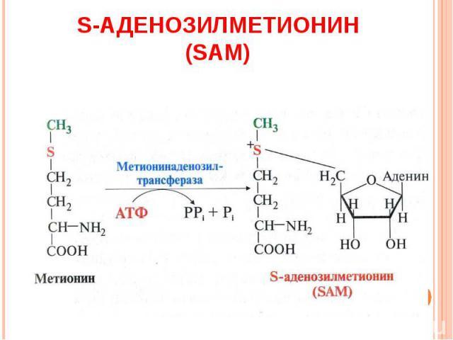 S-АДЕНОЗИЛМЕТИОНИН (SAМ)