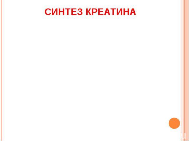 СИНТЕЗ КРЕАТИНА