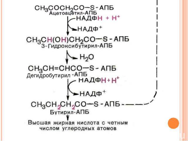 Дегидробутирил