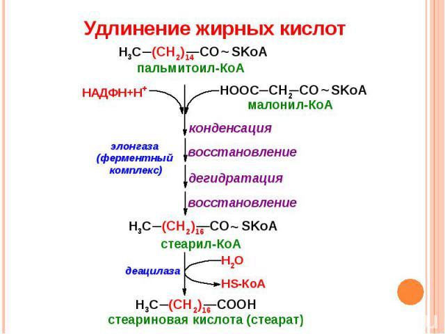 Удлинение жирных кислот