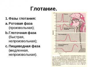 Глотание. 1. Фазы глотания: a. Ротовая фаза (произвольная); b. Глоточная фаза (б
