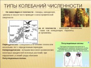 Не зависящие от плотности - пожары, наводнения, ураганы и засухи часто приводят