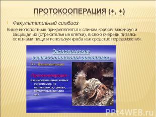 Факультативный симбиоз Кишечнополостные прикрепляются к спинам крабов, маскируя