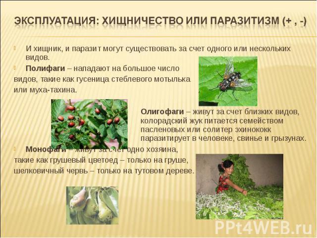 И хищник, и паразит могут существовать за счет одного или нескольких видов. Полифаги – нападают на большое число видов, такие как гусеница стеблевого мотылька или муха-тахина. Олигофаги – живут за счет близких видов, колорадский жук питается семейст…