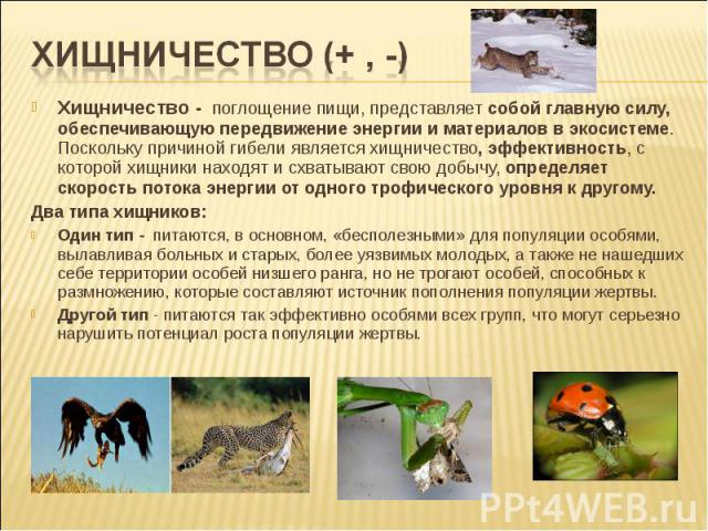 Хищничество - поглощение пищи, представляет собой главную силу, обеспечивающую передвижение энергии и материалов в экосистеме. Поскольку причиной гибели является хищничество, эффективность, с которой хищники находят и схватывают свою добычу, определ…