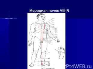 Меридиан почек VIII-R