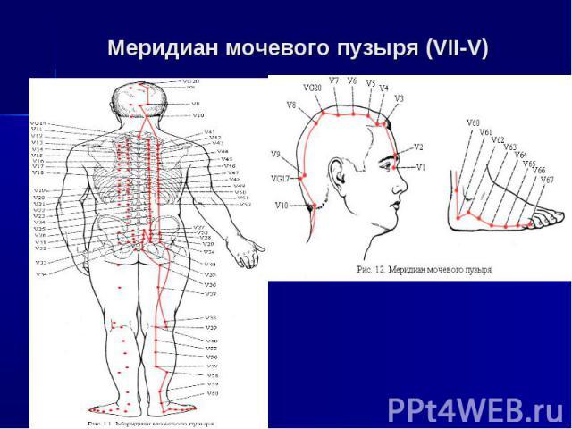 Меридиан мочевого пузыря (VII-V)