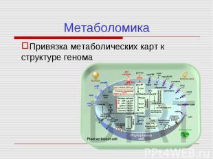 Привязка метаболических карт к структуре генома Метаболомика
