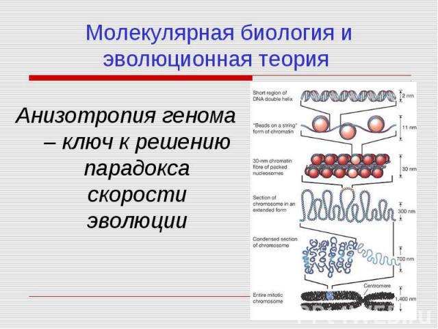 Молекулярная биология и эволюционная теория Анизотропия генома – ключ к решению парадокса скорости эволюции