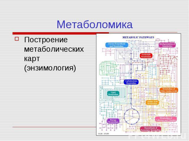 Метаболомика Построение метаболических карт (энзимология)