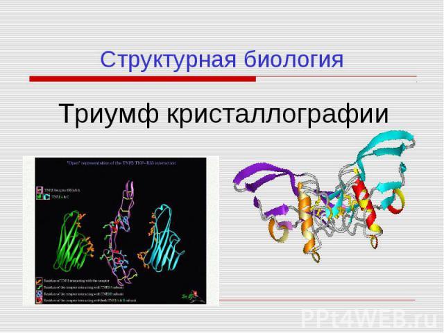 Структурная биология Триумф кристаллографии