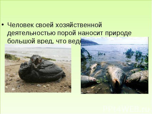 ЗАКЛЮЧЕНИЕ Человек своей хозяйственной деятельностью порой наносит природе большой вред, что ведет к гибели живых существ.