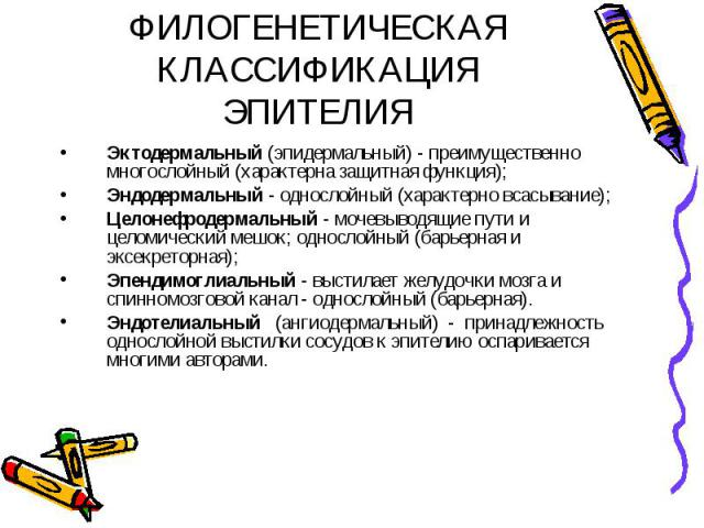 ФИЛОГЕНЕТИЧЕСКАЯ КЛАССИФИКАЦИЯ ЭПИТЕЛИЯ Эктодермальный (эпидермальный) - преимущественно многослойный (характерна защитная функция); Эндодермальный - однослойный (характерно всасывание); Целонефродермальный - мочевыводящие пути и целомический мешок;…