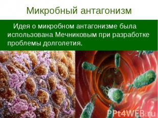Микробный антагонизм Идея о микробном антагонизме была использована Мечниковым п