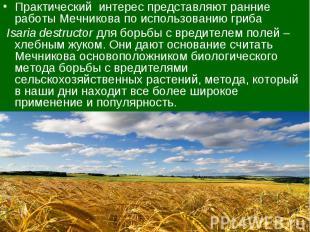 Практический интерес представляют ранние работы Мечникова по использованию гриба