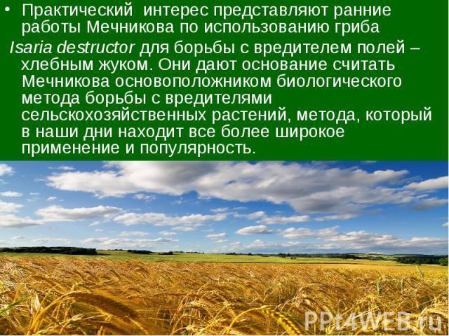 Практический интерес представляют ранние работы Мечникова по использованию гриба Isaria destructor для борьбы с вредителем полей – хлебным жуком. Они дают основание считать Мечникова основоположником биологического метода борьбы с вредителями сельск…