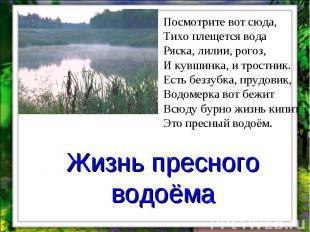 Жизнь пресного водоёма Посмотрите вот сюда, Тихо плещется вода Ряска, лилии, рог