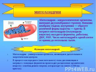 МИТОХОНДРИИ Митохондрия - универсальная органелла, являющаяся дыхательным и энер