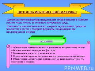 ЦИТОПЛАЗМАТИЧЕСКИЙ МАТРИКС 1. Обеспечивает изменение вязкости цитоплазмы, котора