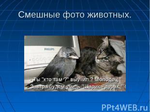 Смешные фото животных.