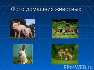 Фото домашних животных.