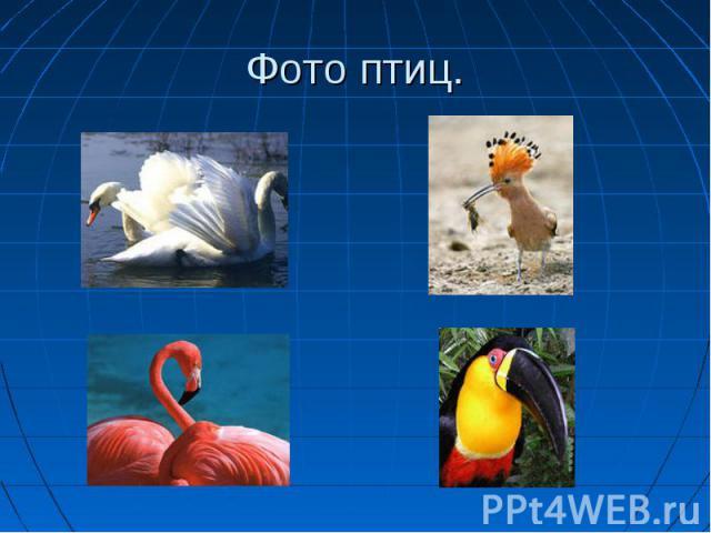 Фото птиц.