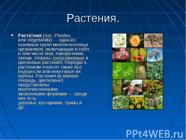 Растения. Растения (лат. Plantae, или Vegetabilia) — одна из основных групп многоклеточных организмов, включающая в себя в том числе мхи, папоротники, хвощи, плауны, голосеменные и цветковые растения. Нередко к растениям относят также все водоросли …