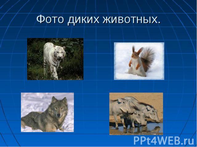 Фото диких животных.