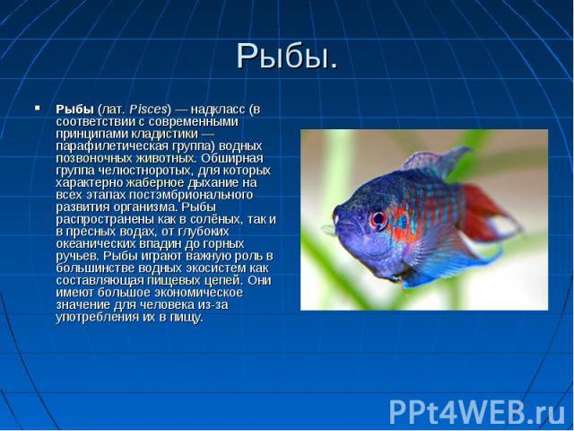 Рыбы. Рыбы (лат. Pisces) — надкласс (в соответствии с современными принципами кладистики — парафилетическая группа) водныхпозвоночных животных. Обширная группа челюстноротых, для которых характерно жаберное дыхание на всех этапах постэмбрионального …