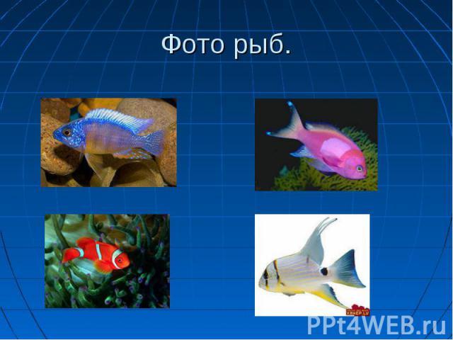 Фото рыб.