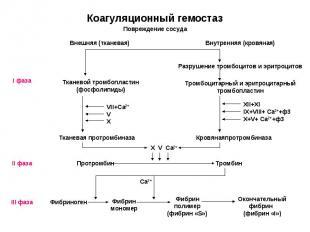 Разрушение тромбоцитов и эритроцитов Внешняя (тканевая) Тканевой тромбопластин (