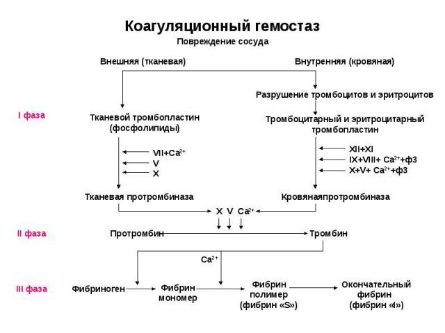 Разрушение тромбоцитов и эритроцитов Внешняя (тканевая) Тканевой тромбопластин (фосфолипиды) Повреждение сосуда Внутренняя (кровяная) Тромбоцитарный и эритроцитарный тромбопластин Тканевая протромбиназа Кровянаяпротромбиназа Протромбин Тромбин I фаз…