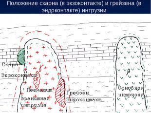 Положение скарна (в экзоконтакте) и грейзена (в эндоконтакте) интрузии