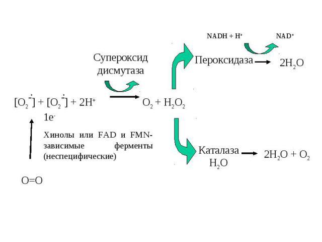 [O2-] + [O2-] + 2H+ O2 + H2O2 Cупероксид дисмутаза Пероксидаза Каталаза Н2О NADH + H+ NAD+ 2H2O 2H2O + O2 . . O=O 1e- Хинолы или FAD и FMN- зависимые ферменты (неспецифические)