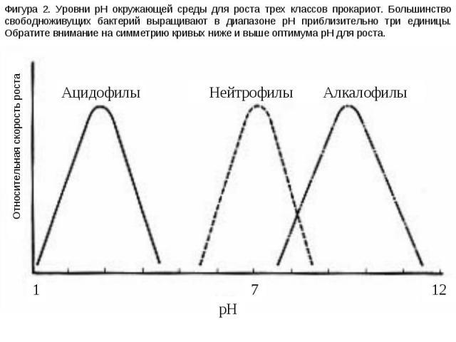 Фигура 2. Уровни pH окружающей среды для роста трех классов прокариот. Большинство свободноживущих бактерий выращивают в диапазоне pH приблизительно три единицы. Обратите внимание на симметрию кривых ниже и выше оптимума pH для роста. Относительная …