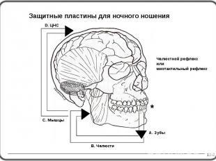 Челюстной рефлекс или миотактильный рефлекс 12-2 D. ЦНС A. Зубы Защитные пластин