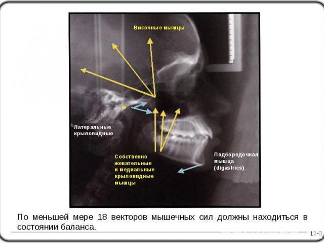 12-3 Подбородочная мышца (digastrics) По меньшей мере 18 векторов мышечных сил должны находиться в состоянии баланса. Височные мышцы Латеральные крыловидные Собственно жевательные и медиальные крыловидные мышцы