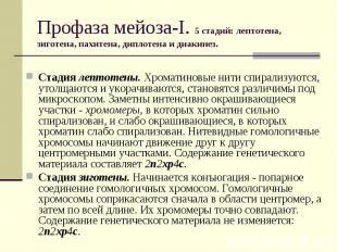 Профаза мейоза-I. 5 стадий: лептотена, зиготена, пахитена, диплотена и диакинез.