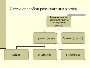 Размножение на клеточном уровне (типы деления клеток) Непрямое (митоз) Прямое (а