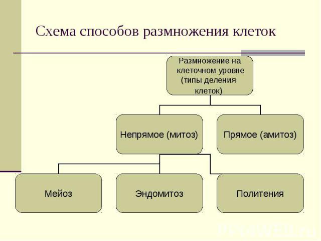Размножение на клеточном уровне (типы деления клеток) Непрямое (митоз) Прямое (амитоз) Мейоз Эндомитоз Политения Схема способов размножения клеток