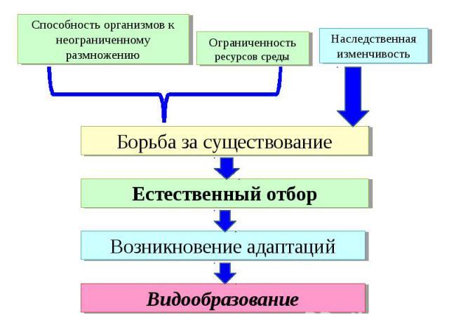 Способность организмов к неограниченному размножению Ограниченность ресурсов среды Наследственная изменчивость Борьба за существование Естественный отбор Возникновение адаптаций Видообразование