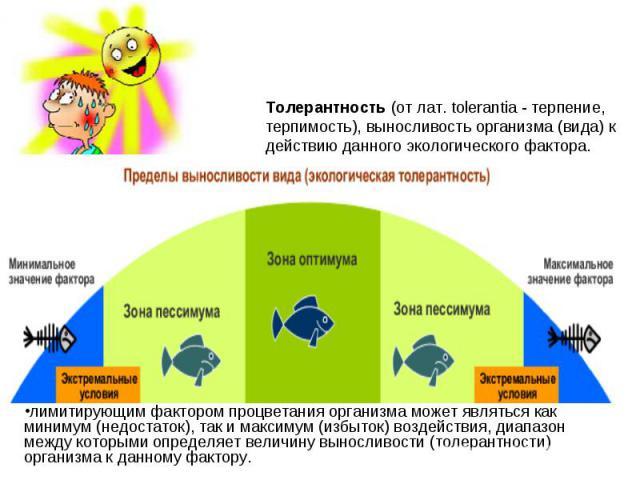 Толерантность (от лат. tolerantia - терпение, терпимость), выносливость организма (вида) к действию данного экологического фактора. лимитирующим фактором процветания организма может являться как минимум (недостаток), так и максимум (избыток) воздейс…