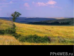 Украинские степи занимают около 31% площади