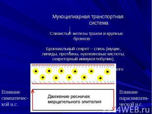 Влияние парасимпати-ческой н.с. Влияние симпатичес-кой н.с. Мукоцилиарная трансп
