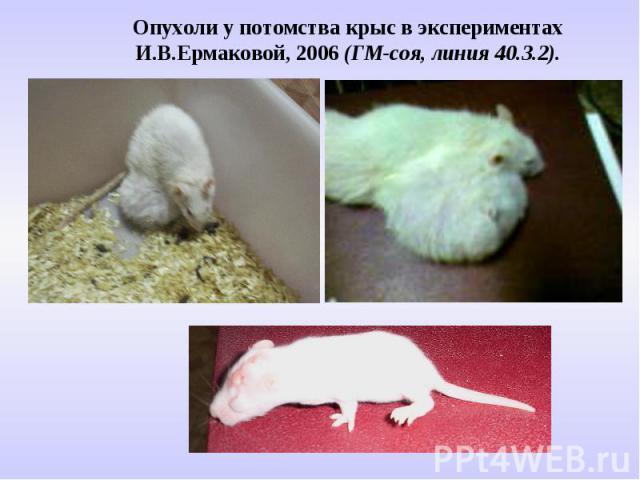 Опухоли у потомства крыс в экспериментах И.В.Ермаковой, 2006 (ГМ-соя, линия 40.3.2).