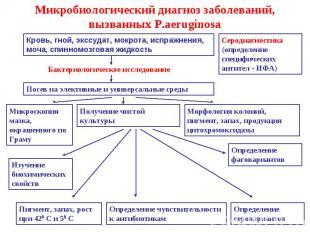 Микробиологический диагноз заболеваний, вызванных P.aeruginosa Кровь, гной, эксс