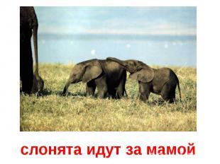 слонята идут за мамой
