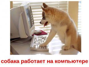 собака работает на компьютере