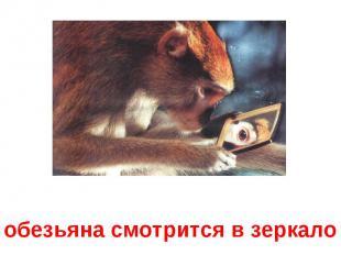 обезьяна смотрится в зеркало